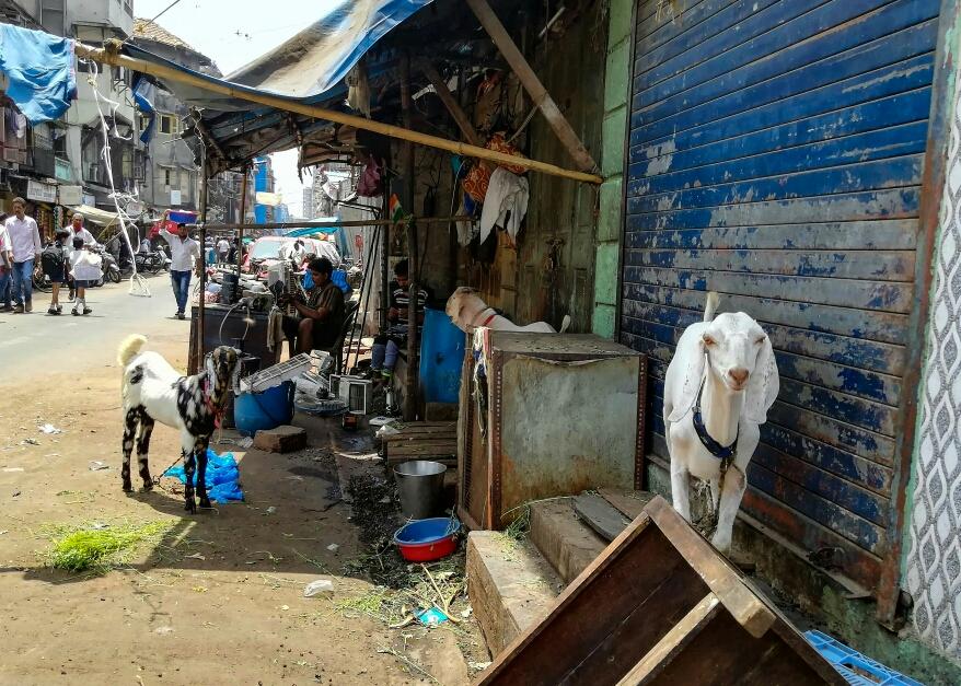 Beaucoup de mignonnes petites chèvres dans les rues, mais la boucherie n'est pas loin et l'issue de leur journée n'est guère enviable...