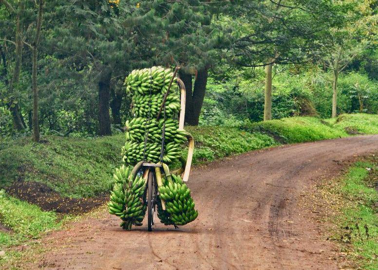On est vraiment des petits joueurs avec nos vélos, comparés aux Ougandais !