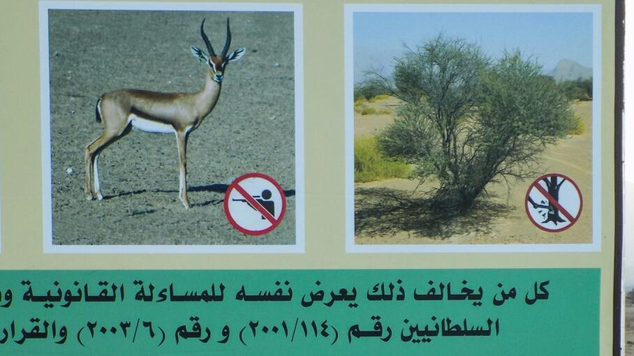 Le lendemain on a vu  ce panneau, les animaux de la nuit étaient en fait des oryx, une sorte de gazelle
