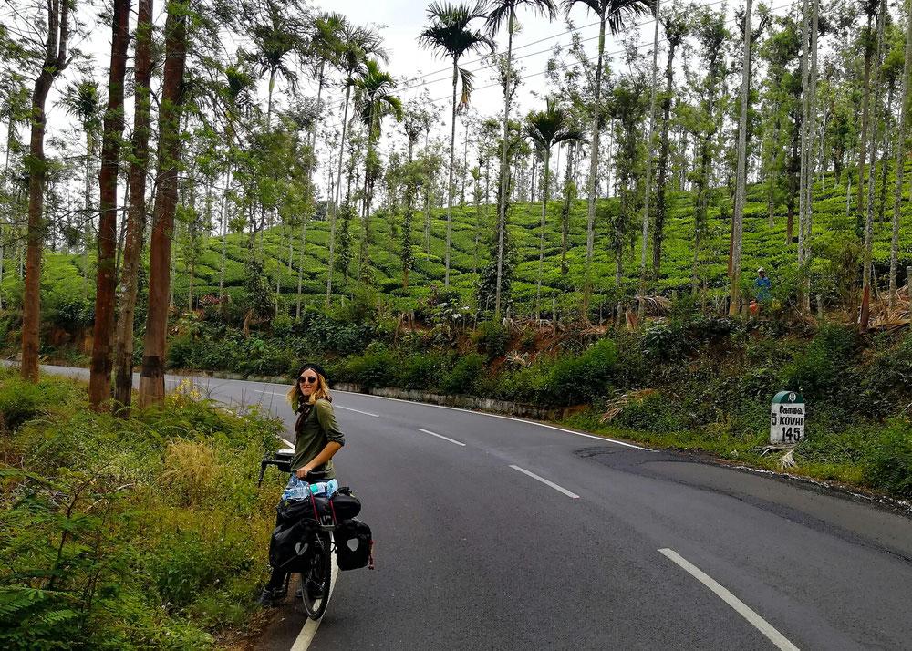 On retrouve les plantations de thé