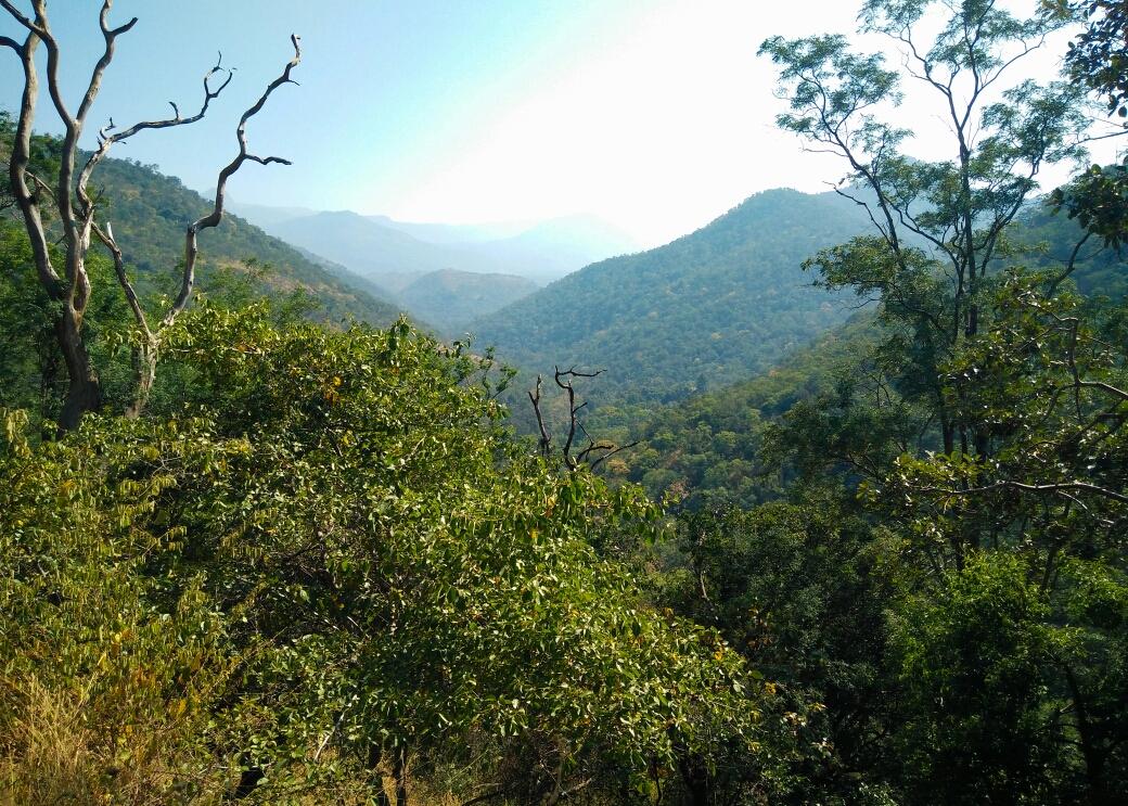 Tamil Nadu et Karnataka droit devant nous ! (les montagnes et la jungle, oui c'est le programme des prochaines semaines !)