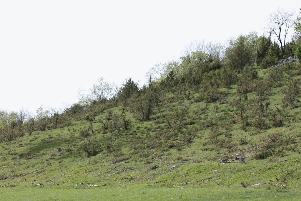 prairie et colline sèche, thermophile, calcaire, favorable à une majorité d'orchidées