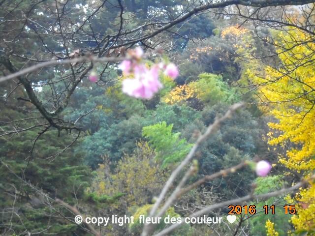 何と、季節外れの桜も咲いてました~っ。。。