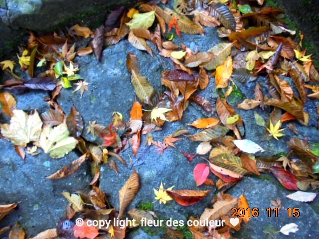 石畳の落ち葉も色んな色合いで綺麗ですね~っ