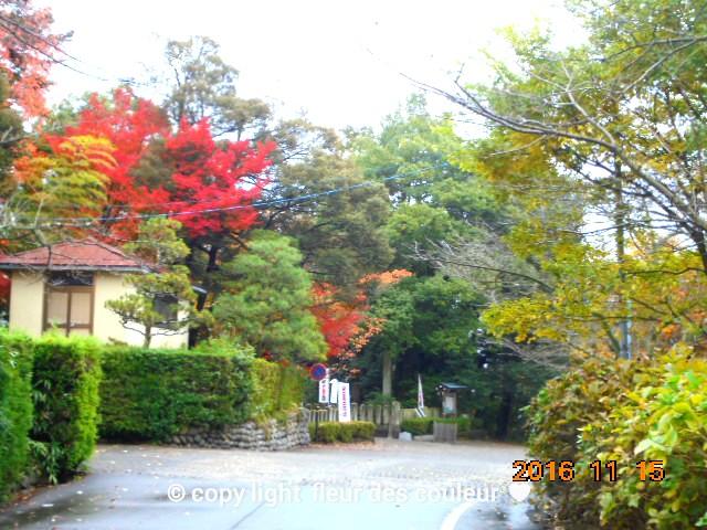 綺麗に手入れがされた日本庭園です