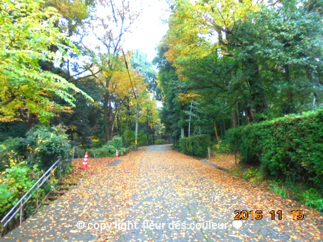 道路の落ち葉も風情があります
