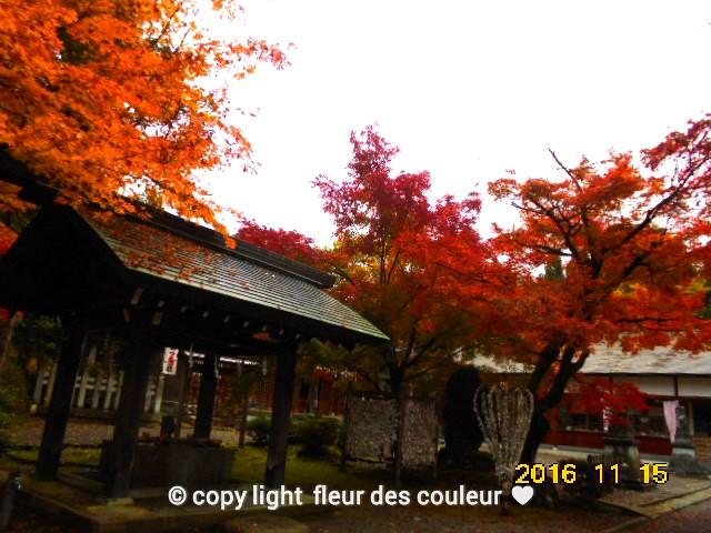 神社の紅葉も華やかに色付いてて美しい。。。