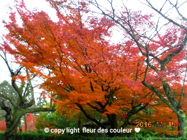 秋の紅葉は良いですね~っ。。。