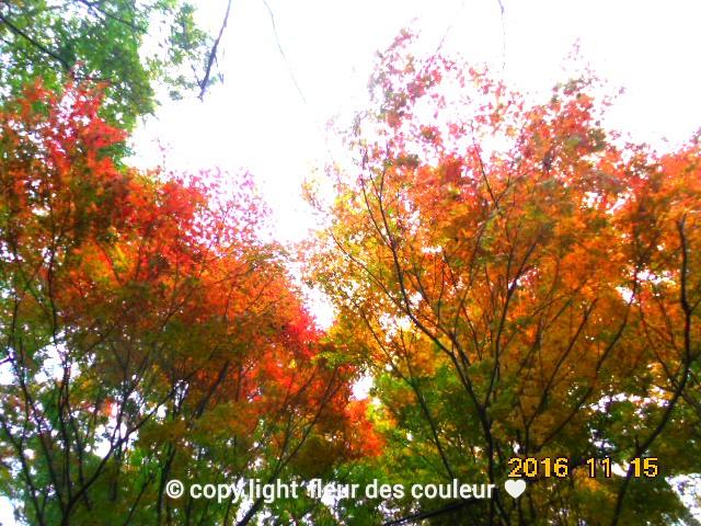 美しい色合い、自然は偉大ですね~っ。。。