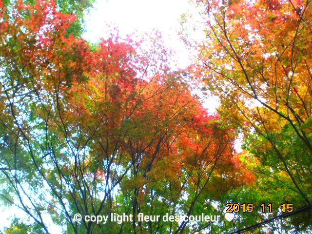 自然の紅葉がまるでモザイクの様に美しい色合いで素敵ですね~っ、