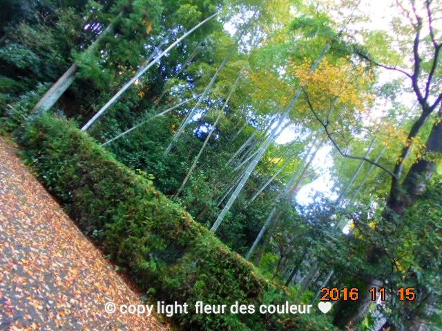 秋の竹林も美しいわね~っ。。。