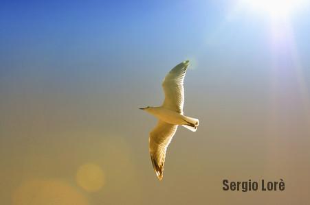 Die Gedanken sind frei, grenzenlos frei, frei wie der Vogel im Winde !-Sergio-Lorè