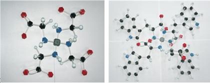 Fig.6 単座配位の分子モデル(左:グリシン 右:トリプトファン)  分子モデルからわかるように、分子量が大きいアミノ酸が単座配位してしまうと立体障害が起きることは明らかである。