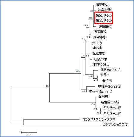 図10  東海地方の地域個体群間の系統樹