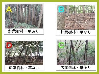 4つの地点の植生