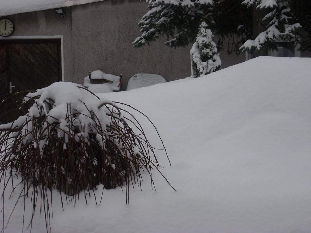 Die Weide ist übrigens etwa 1,5 Meter hoch.