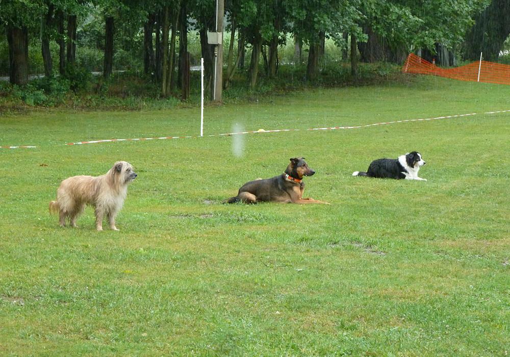 Rudi als weißer Hund in der Gruppe - dem Regen trotzte er allein