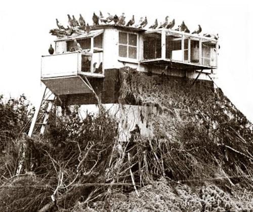 Een gecamoufleerd Brits duivenhok uit 1918. Misschien hoorde die aanvlieger in Dordrecht hier wel thuis...