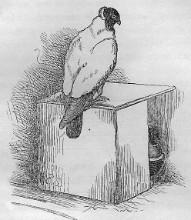 Een broedbak op de vloer uit de handleiding van 1872