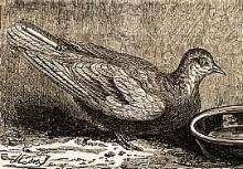 Een holle ganzenveer zat vast aan de staart