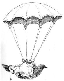 In beide Wereldoorlogen lieten de Engelsen duiven per parachute neer in de bezette gebieden van Frankrijk en België. Aan een pootje zat een boodschap voor degene die de duif vond, namelijk het verzoek om bepaalde informatie over de Duitse bezetter in het
