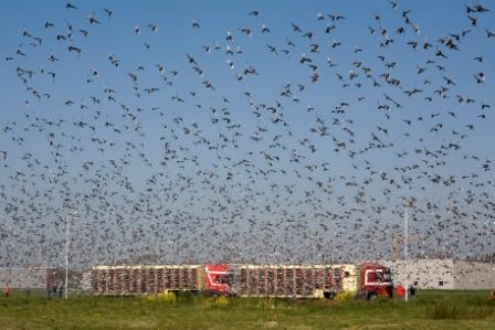 De 987 duiven van 202 deelnemers in sector 4 werden om 14:15 uur gelost. Nationaal werden er 12.440 duiven van 2.349 deelnemers los gelaten.