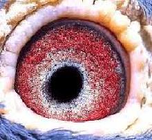 De ogentheorie...