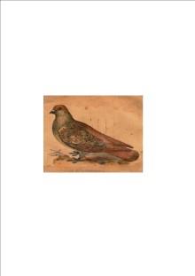 Deze afbeelding staat op het omslag van Liese's boekje uit 1872, zo te zien een duif van het Luikse type