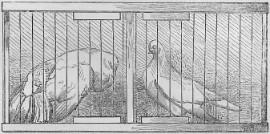 Een zogenoemde paarkooi met links de doffer en rechts de duivin