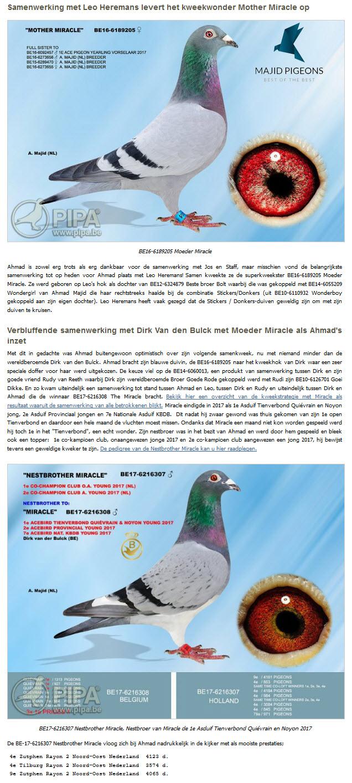 Amed Maijd - De website van postduiven houders vereniging