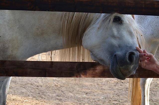 hello! Balance - Pferde und Entspannung