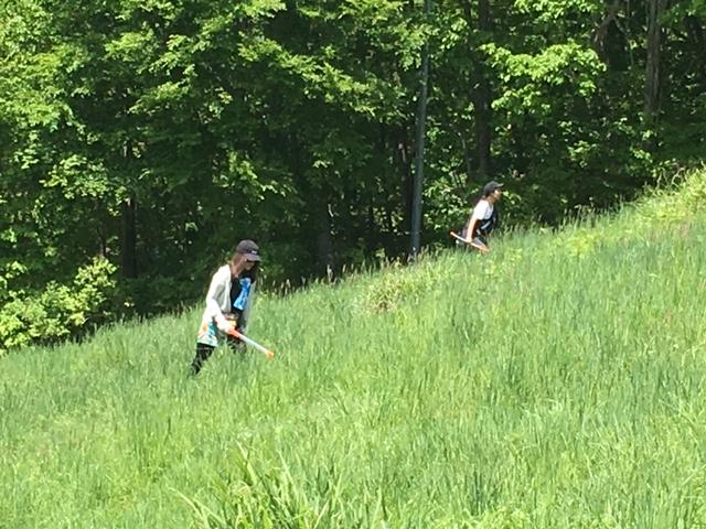 膝くらいまで繁る緑の中を、丁寧にゴミを探す女性!