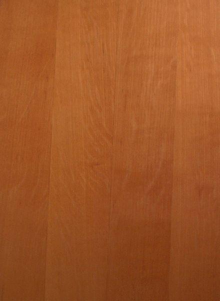 Spitzahorn