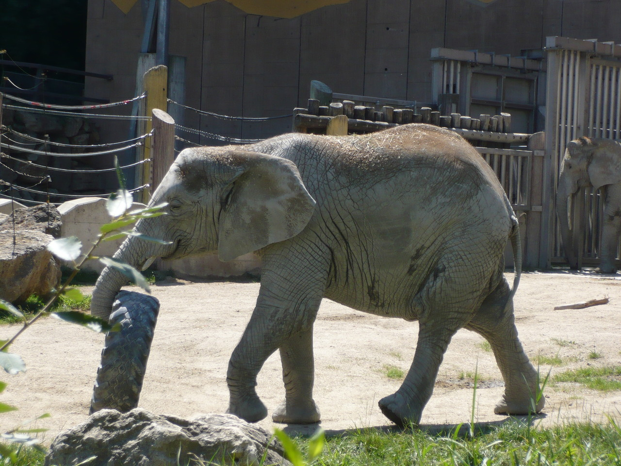 Elefant - Tierpark - Wien