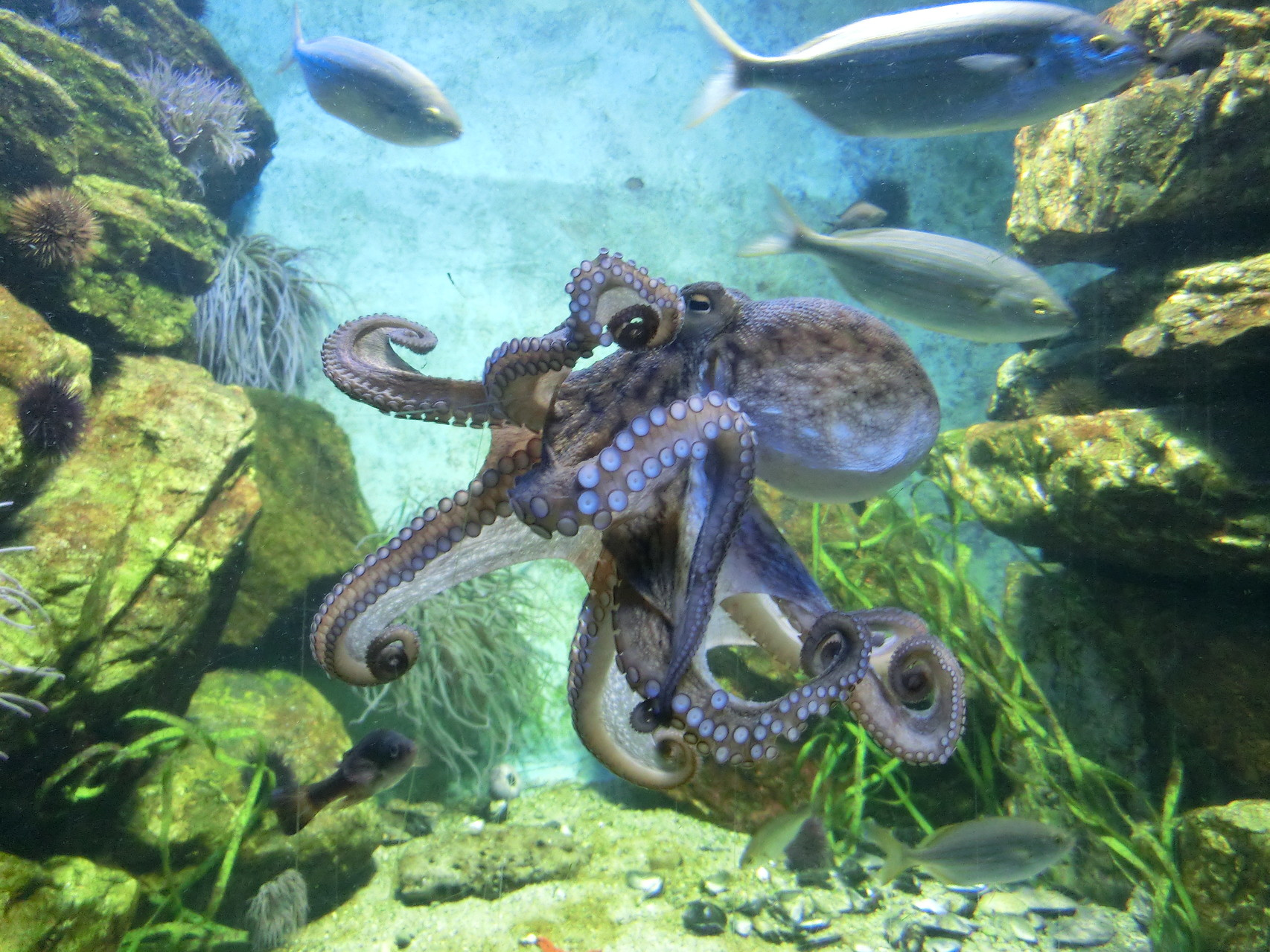 Unterwasserwelt - Frankfurter Zoo