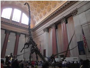 Dinosaurier im Naturkundemuseum