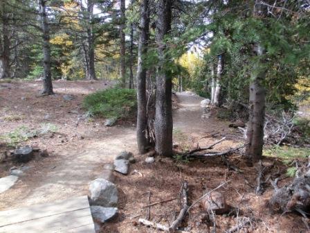 Waldspaziergang ohne Elch...