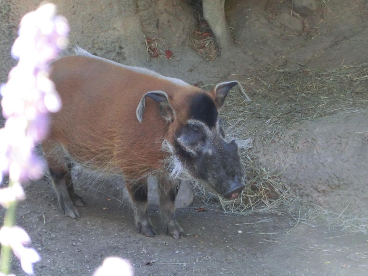 Warzenschein - Lincoln Park Zoo - Chicago