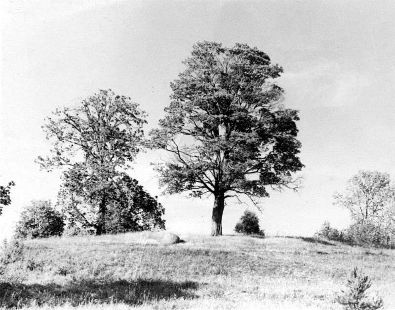 Вид на место церкви с юго-западной стороны. Фото Л.Т.Перепеча 1960-е г.