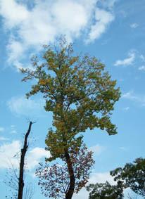 下から紅葉の木