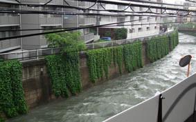 絵本塾より神田川の濁流の画像