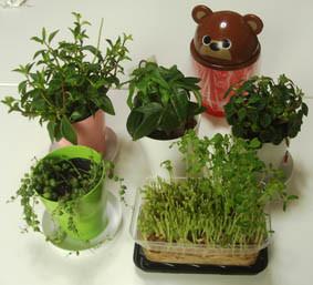 絵本塾の仲間たち(観葉植物)の画像