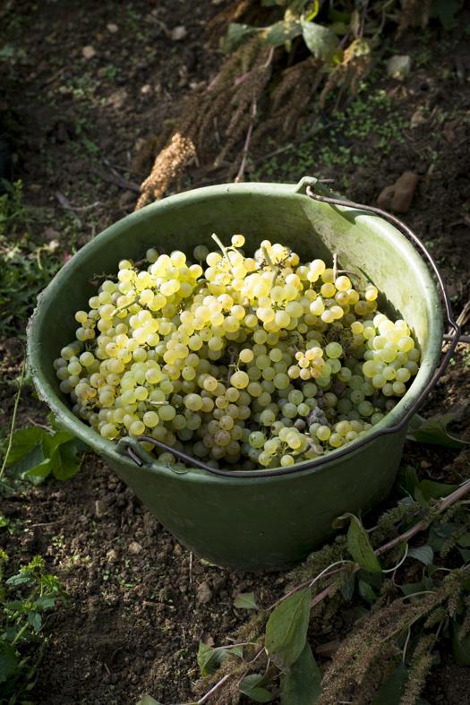 Naturwein-und-Biowein-wie-unterschieden-sie-sich