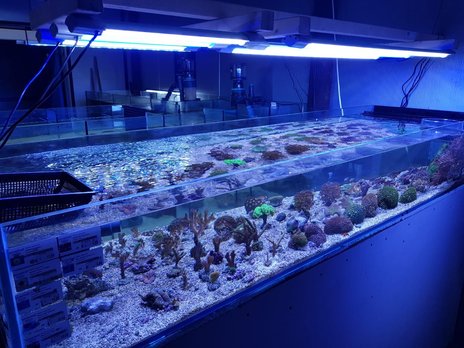Ruim aanbod koralen
