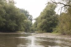 Donaualtwasser