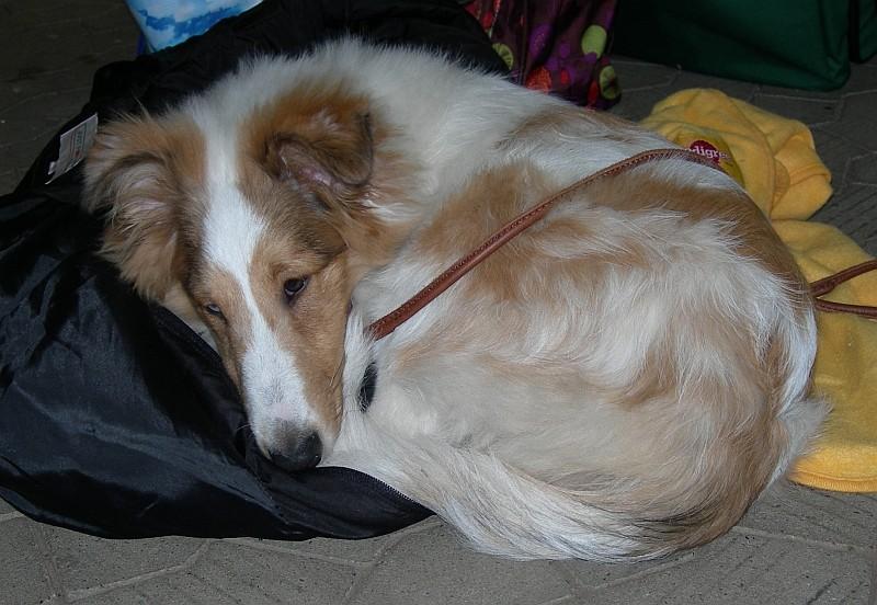 10.12.2011 - Retti ist alle, er ist müde.