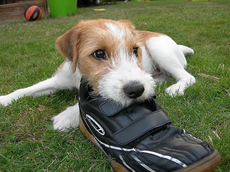 """Was """"kuckstdu"""", das ist mein Schuh!"""