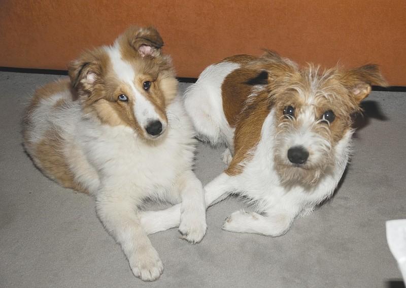 """05.11.2011, ....... kurz danach spielen sie wieder """"Liebe Hundies"""" , die zwei Rabauken  ;-)"""
