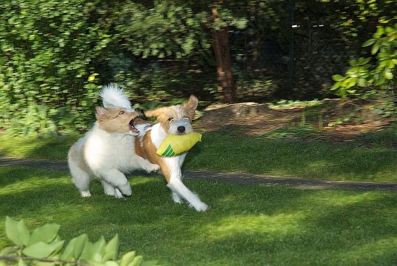 """15.10.2011, kleiner Streit im Garten um den """"Restball"""", mehr Pelle blieb nicht übrig ;-)"""