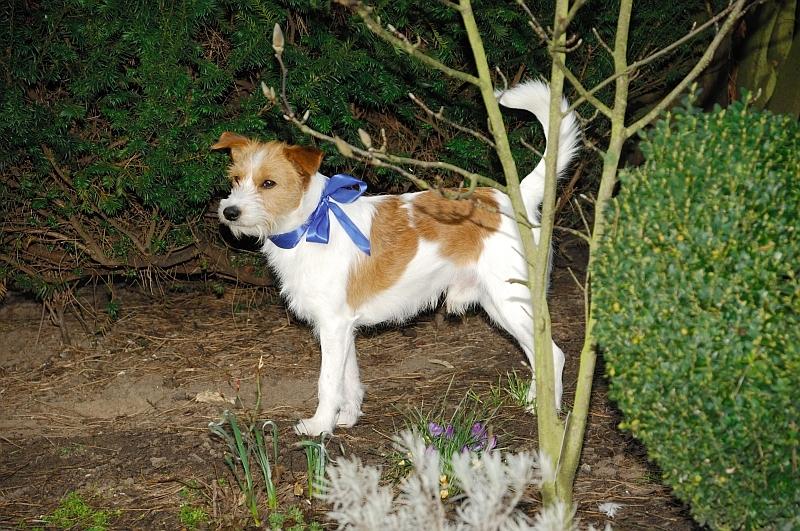 16. 03. 2012 - Ein Prachtkerl, auch ohne Chappy